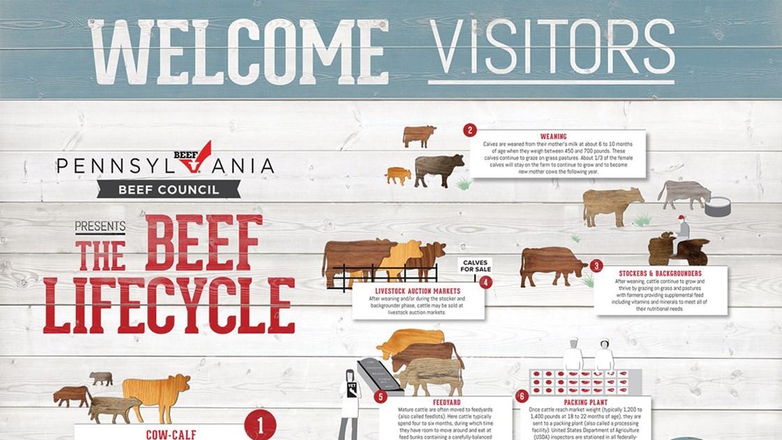 Raising Beef