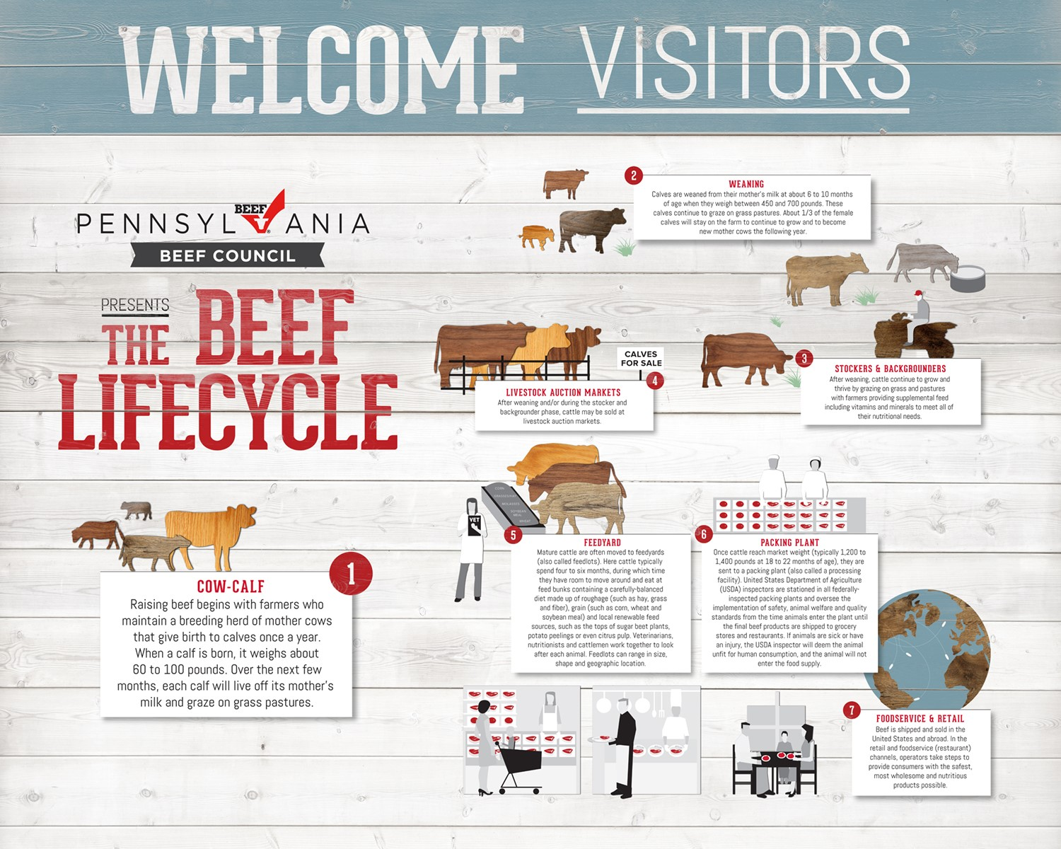 Beef Lifecycle